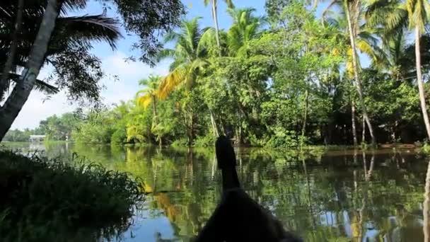 Canoa pasando remansos — Vídeo de stock