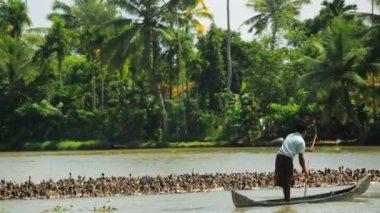 Local duck farmer — Stock Video
