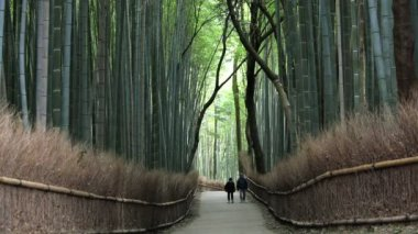 People walking through bamboo forest — Vídeo de stock