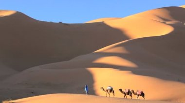 Man leading camels — Stock Video