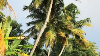Passing Palm along Kerala backwaters — Stock Video