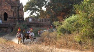 Bullock carts and pagodas — Stock Video