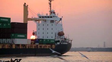 Seagulls near passing vessel — Stock Video