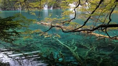Colorful Pool in Jiuzhaigou National Park — Stock Video
