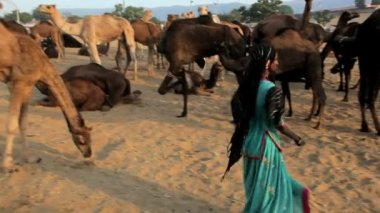 Female dancing by camels — Stock Video
