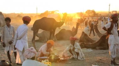 Camel herdsman at sunset — Stock Video