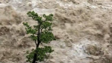 Lone tree on raging swollen flooded river — Stock Video