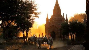 Bullock carts and pagodas at sunset — Stock Video