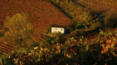 Cottage in the vineyards — Wideo stockowe