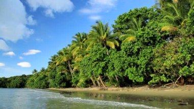 Tropical beach  Cape Tribulation,  Queensland — Stock Video