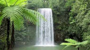 Millaa Millaa Falls, Atherton Tablelands  Queensland — Stock Video