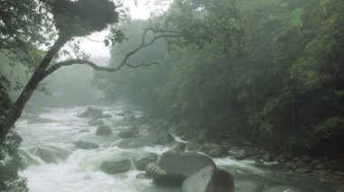 Rain in the mist in a Tropical Rainforest on a fast flowing river — Stock Video