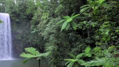 Millaa Millaa Falls  Atherton Tablelands  Queensland — Stock Video