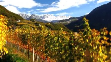 Vineyards nr Bolzano, Trentino Alto Adige — Stock Video