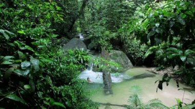 Tropical Rainforest, Mossman Gorge,  Queensland — Stock Video