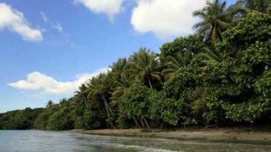 Tropical beach Cape Tribulation — Stock Video