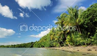 Tropical beach, Cape Tribulation,  Queensland, Australia — Stock Video