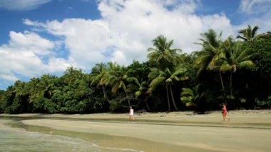 Tropical beach, Daintree National Park, Queensland — Stock Video