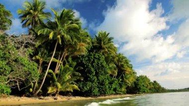Tropical beach  Cape Tribulation   Queensland — Stock Video
