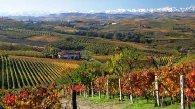 Vineyards nr Bolzano, Trentino Alto Adige — Stock Video