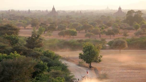 Temples and Pagodas — Vidéo