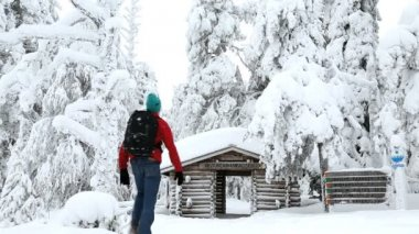 Male walker entering snowy frozen spruce forest — Stok video