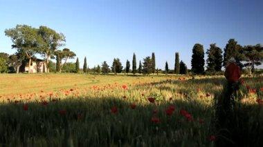 Male walking along Poppy flowers field — Stockvideo