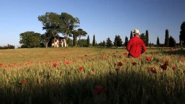 Male walking along Poppy flowers field — Stock Video