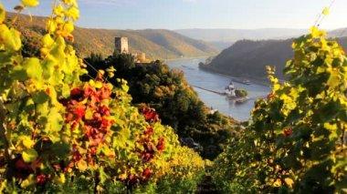 Vineyard scenic with the ruins of Castle Gutenfels Pfalzgrafenstein — Stock Video