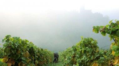 Two men harvesting grapes — Stock Video