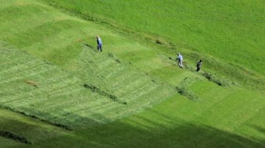 Laborers harvesting hay — Stock Video