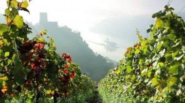Hillesheih Vineyard, Kaub, Rhine Valley, Germany on a misty day — Stock Video