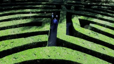 People walking through a green hedge maze — Stock Video