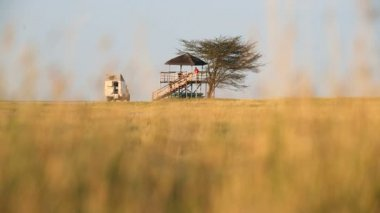African Savannah Botswana people camp safari National Park — Stock Video
