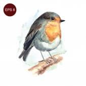 Hand drawn watercolor robin bird — Stock Vector