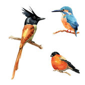 Hand drawn watercolor birds — Stock Photo