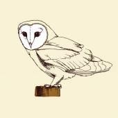 Hand drawn owl sketch — Stock Vector