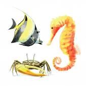 Hand drawn watercolor sea creatures — Stock Vector