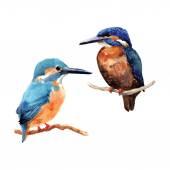 Hand drawn watercolor birds — Stock Vector