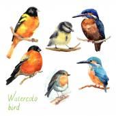 Hand drawn watercolor birds. — Stock Photo