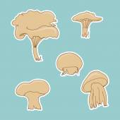Hand sketched mushrooms — Stock Vector