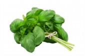 Fresh green basil — Stock Photo