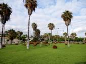 Park in Tenerife, Canary Islands, Spain — Stockfoto