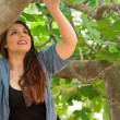 Girl climbing on a fig tree — Stock Photo #75115859