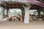 Batch of animal under the shade — Stock Photo
