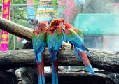 Macaws on the log — Stock Photo