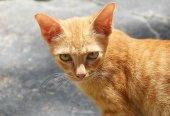 Orange cat eye — Zdjęcie stockowe