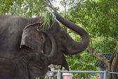 Dítě slon prosí máma pro potraviny — Stock fotografie