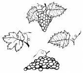Sketch of grapes — Stock Vector