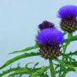 Bumble bee on thistle flower — Stock Photo #61451829